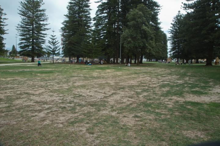 esplanade-grass