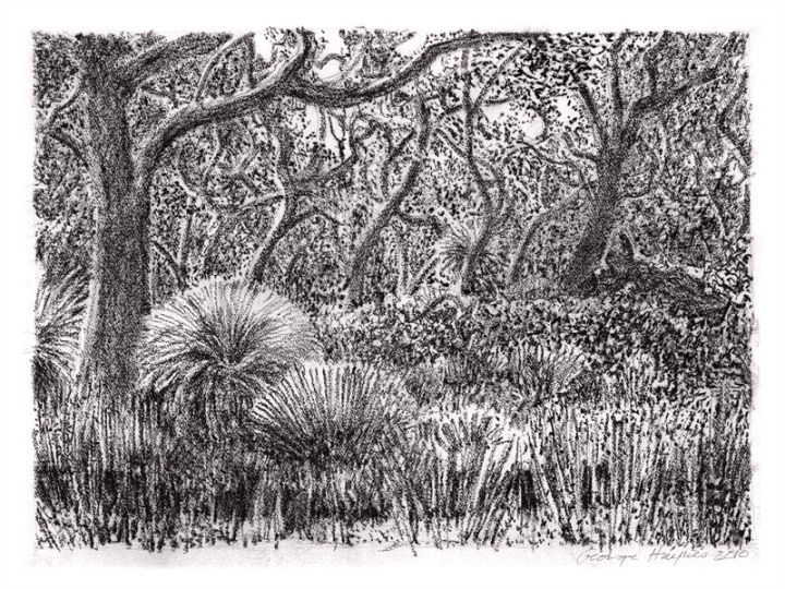 Bibra Banksia by George Haynes