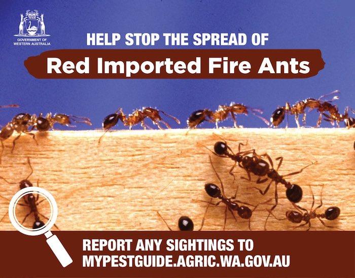 Fire Ants!